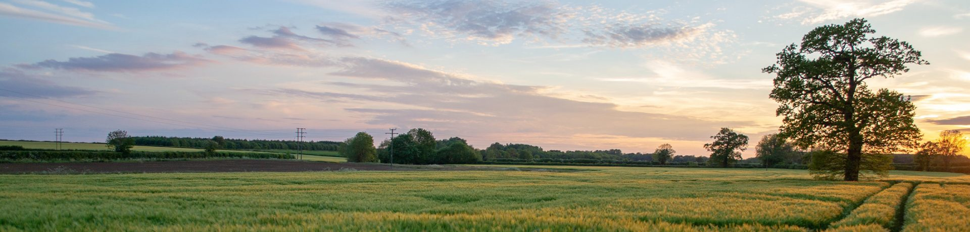 Picture landscape